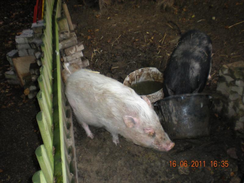 Saustall Bei aller Liebe - das ist eine Schweinerei