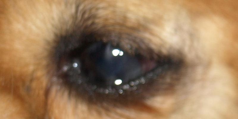 Das operierte Auge2